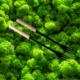 Les fourchettes à fondue très natures et légères du Fouclette portable